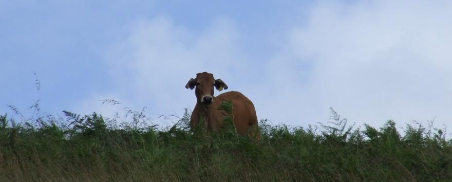 Knee deep in native grasses
